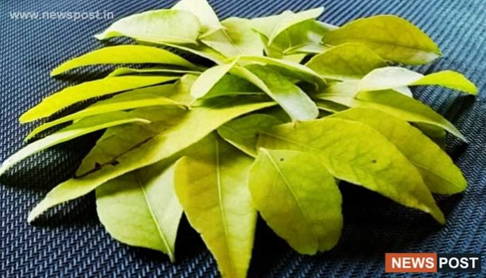 11 Health Benefits Of Curry Leaves